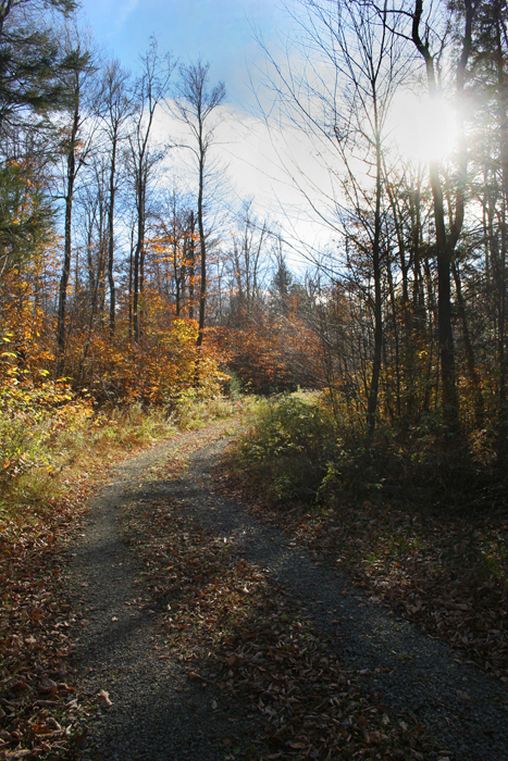 Trail in southern section of Promised Land State Park.