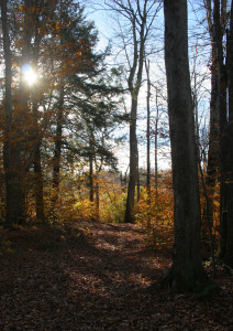 Woods in central Barrett Township.