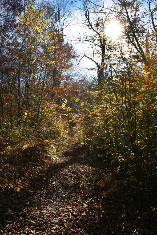 Woods in northern Barrett Township.