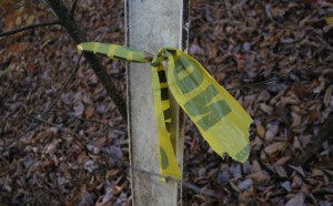 Torn strip of no hunting tape in Promised Land State Park.
